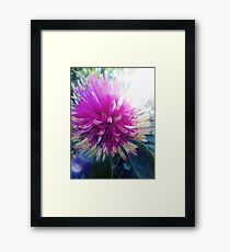 Macro Pink Flower Photography Framed Print