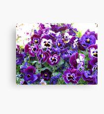 Purple Pansy Frenzy Canvas Print