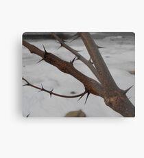 Locust Branch Metal Print