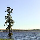 Lonely Tree in the Chowan River by WeeZie