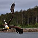 Eagle Air! by James Anderson