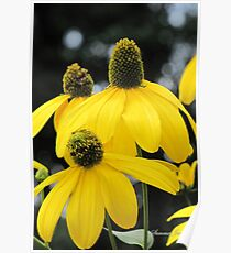 Bright Colored Wind Tossed Flowers Poster