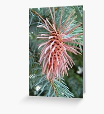 Spruce Cone with Galls Greeting Card