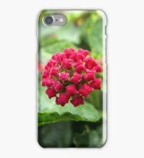 Lantana I iPhone Case/Skin