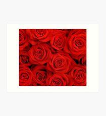 Red Spectacular Roses Art Print