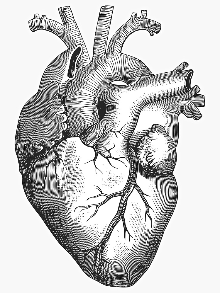 Heart Anatomical Drawing Etching Beat Pulse Sticker By