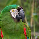 Ginger footed Parrot by M.S. Photography/Art