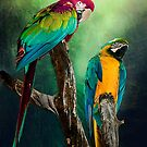 Macaw's Siesta Time by Brian Tarr