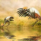Grey Crowned Cranes. by Brian Tarr