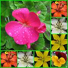 Raindrops On Petals Collage von BlueMoonRose