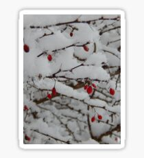 Berries on Snow Sticker