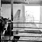 Barnyard Black & White  by Kathleen Daley