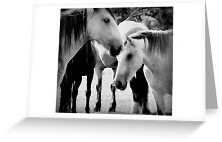 Schöne Pferde von jane Mcainsh
