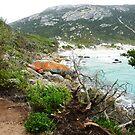 Little Oberon Bay by Deirdreb