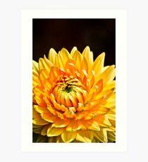 Bright Yellow Chrysanthemum Art Print