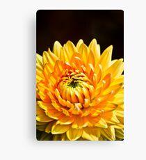 Bright Yellow Chrysanthemum Canvas Print