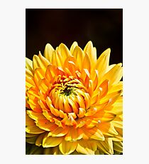 Bright Yellow Chrysanthemum Photographic Print