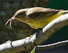 palm warbler with lunch by Dennis Cheeseman