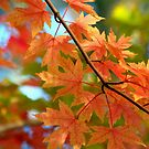 Autumn Leaves by K D Graves Photography