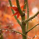 Just One Leaf by K D Graves Photography
