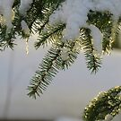 Sunlit Snow Covered Branches and Icicles by MaeBelle