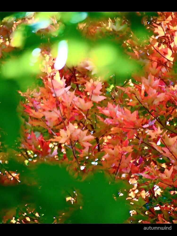 Autumn Magic by autumnwind