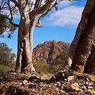 Brachina Gorge, Study #1, Flinders Ranges, South Australia. by johnrf