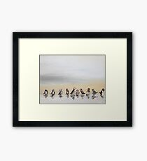 Who Will Love a Little Sparrow? Framed Print