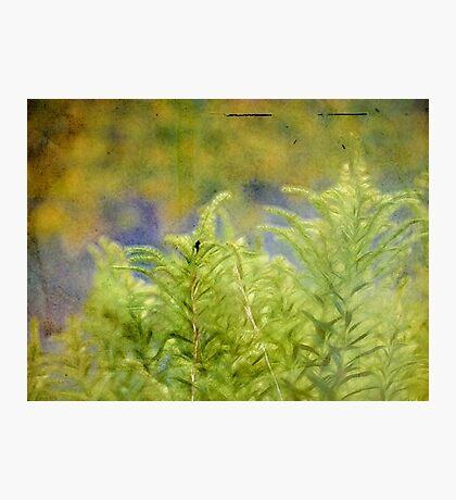 wild grasses 22 Photographic Print