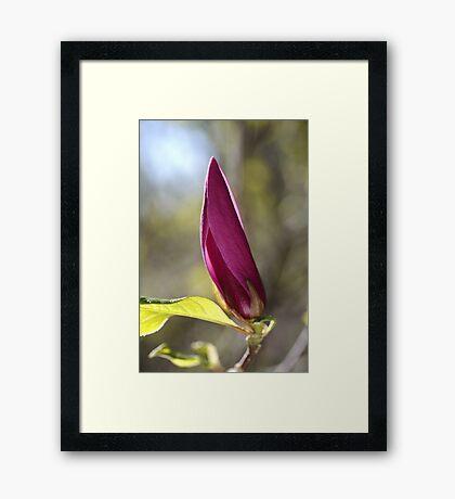 Spring Magnolia Framed Print