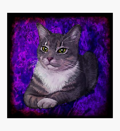 Grey Tabby Photographic Print