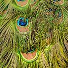 The Eyes by Werner Padarin