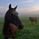 Horses at Dawn by Barbara Morrison