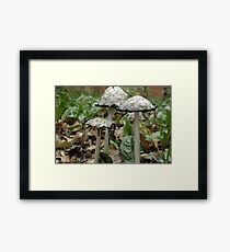 Inky coprinus among fallen leaves Framed Print