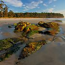 HDR Hanssons Beach Moss covered rocks, Adventure Bay, Tasmania by PC1134