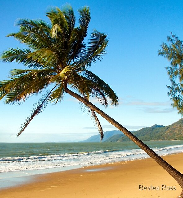 Where The Rainforest Meets The Sea by Bevlea Ross