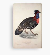 John Gould A Century of Birds from the Himalaya Mountains 1831 061 Tragopan Hastingsii Canvas Print