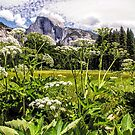 Cook's Meadow - Yosemite Valley - California USA by TonyCrehan