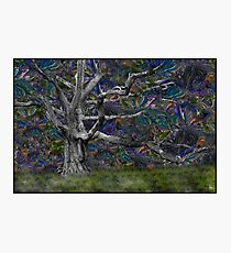 Psychedelic Oak Photographic Print