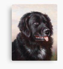 Newfoundland Dog Portrait Canvas Print