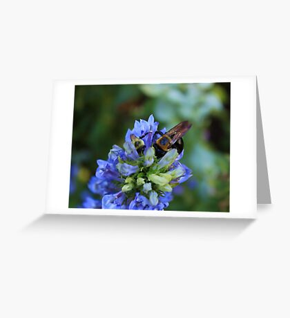 Bee on the flower photography Greeting Card