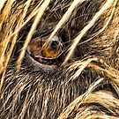 Wolfie's Eye by lincolngraham