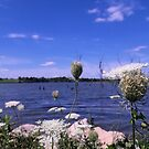 Queen Anne's Lace by Mozingo Lake by Ben Waggoner