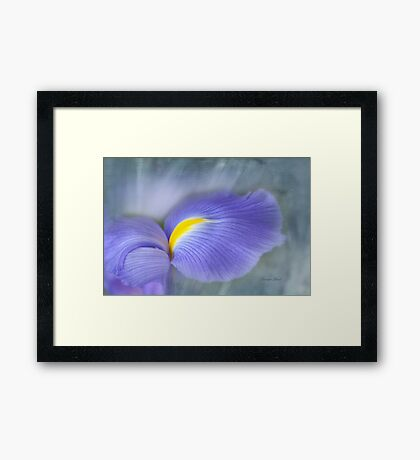 Iris Delight Framed Print