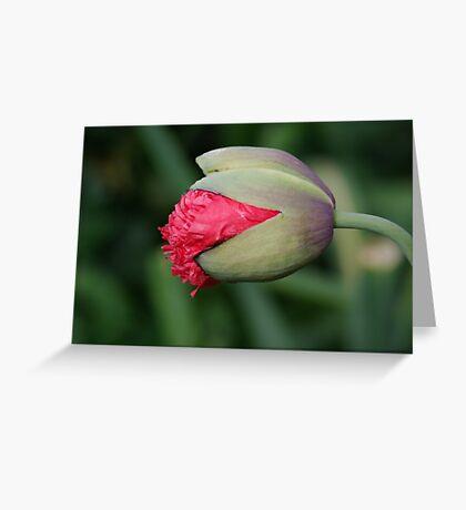 Papavar Somnifarum - The Beginning Greeting Card