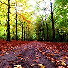 Colors of the Autumn by Gabriel Forgottenangel