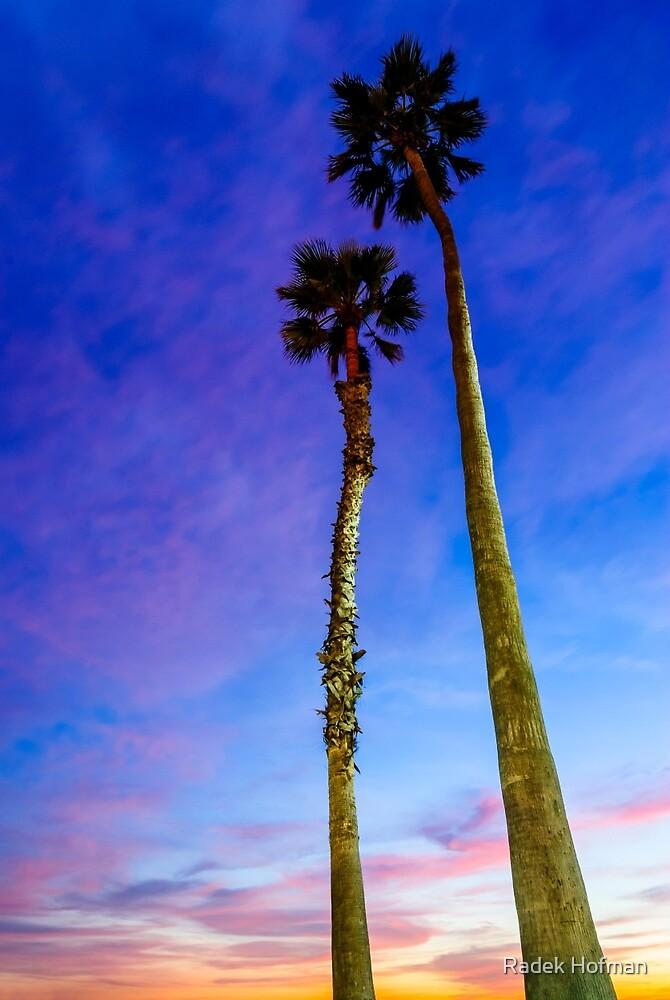 Palm Trees by Radek Hofman