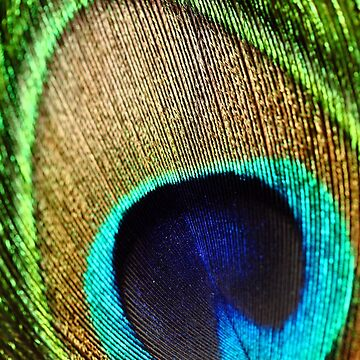 Peacock Feather by amazingshop