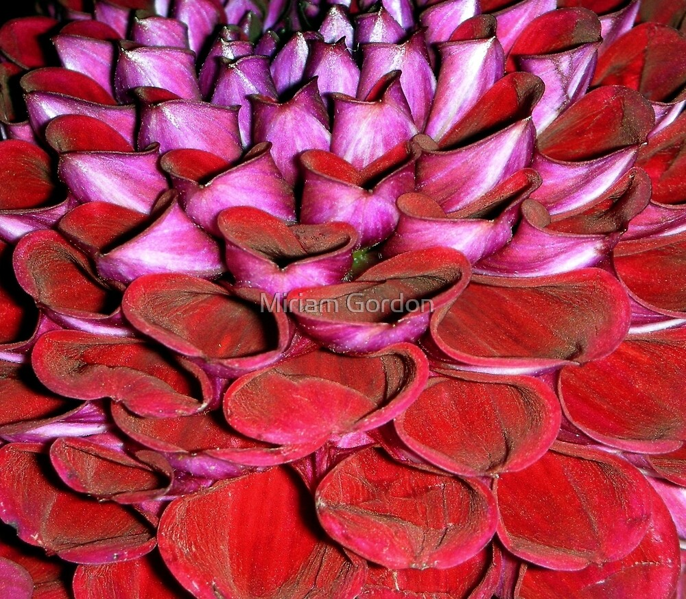 natural abstract by Miriam Gordon
