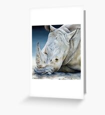 'Africa Dozing – White Rhino' square Greeting Card
